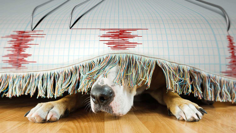 ¿Pueden sentir los animales la inminencia de un terremoto?